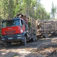Лесовоз Iveco